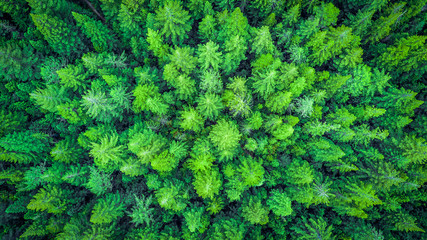 Aerial view on The Redwood Whakarewarewa Forest. Rotorua, New Zealand.