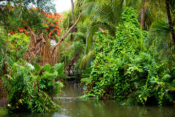 Rain in the tropics. Beautiful thickets and a river.