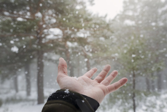Caressing the cold snowflakes with your hand during the snowfall in the forest.