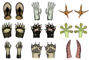 Paws of animals or footprints and wildlife. Bird and sea creatures, hands of monkey and dog, bear and frog, tentacles of octopus and cat, hoof of cow. Domestic or farm or pets. Traces of mammals.