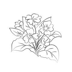 Primrose illustration on white background.