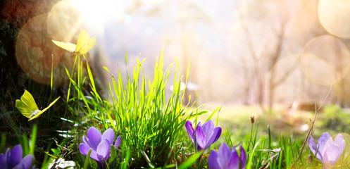 Fototapete - abstract nature spring Background; spring flower and butterfly