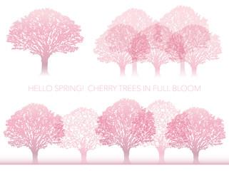 満開の桜の木 セット