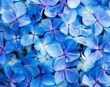 Fundo com flores azuis