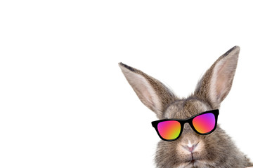 osterhase cool