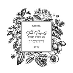 Vector design template with tonic and spicy plants. Hand drawn spices illustrations. Vintage frame with aromatic elements. Perfumery and cosmetics ingredients.