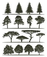 Set of trees silhouettes. Fir-trees, pines, birches, aspens and acacia trees