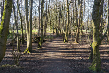 Baron Woodland after Winter