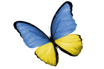 Бабочка с Украинским флагом на крыльях, изолирована на белом фоне