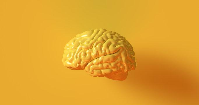 Yellow Human brain Anatomical Model 3d illustration