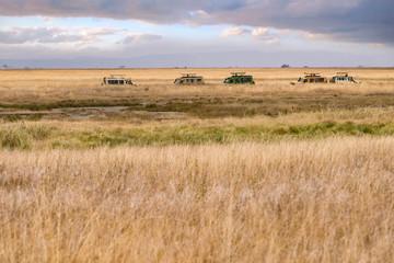 SAFARI Game drive in Serengeti,National Park,Tanzania