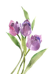 Bouquet of purple tulips. Spring flowers. Flower mood. Watercolor background.