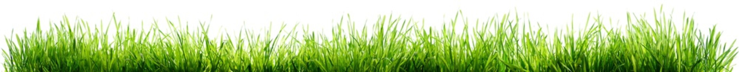 Grass Isolated On White - Spring Border