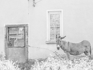Donkey poses in front of an abandoned house number 13 in the Fore-Balkan Bulgarian village of Debnevo