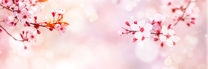 Spring blossom with pink tree flowers in sunny day background