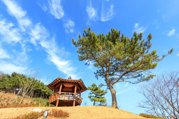 Scenery of Mujedeung park at spring season in Busan city