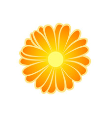 Vector illustration, flat cartoon orange luminous marigold flower isolated on white background