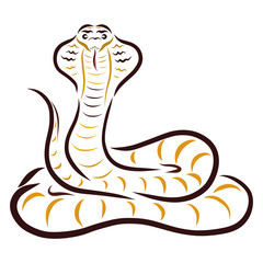 Cobra, drawing with flowing lines, pattern