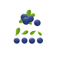 Blueberry set. Vector