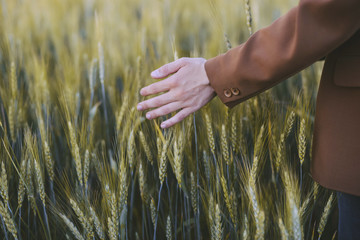 Cropped hand of woman touching crops at farm