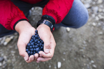 Cropped hands of boy holding blueberries