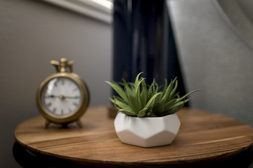 Close-up of houseplant and clock on wooden table at home