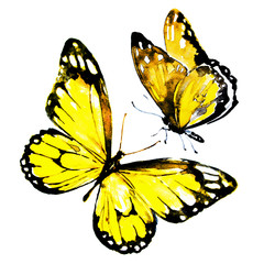 beautiful yellow butterflies,watercolor,isolated on a white