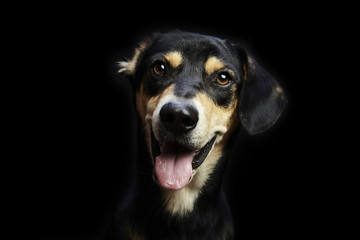 Close-up portrait of dog panting against black background