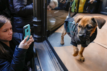 A girl photographs a puppy playing in a window display of Saks Fifth Avenue, promoting pet adoption on the occasion of National Puppy Day, in New York