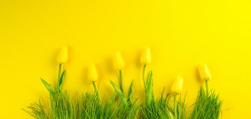 Fotoväggar - Easter background. Bright yellow eggs and vivid spring blooming tulip flowers and fresh grass over yellow background. Easter backdrop