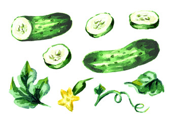 Cucumber elements set. Watercolor hand drawn illustration, isolated on white background