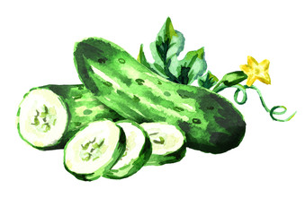 Cucumbers. Watercolor hand drawn illustration, isolated on white background