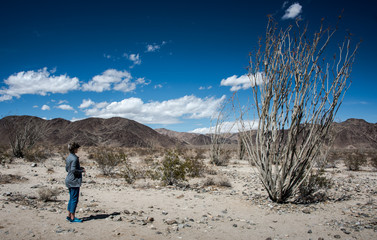 Woman viewing giant ocotillo cactus in Joshua Tree National Park
