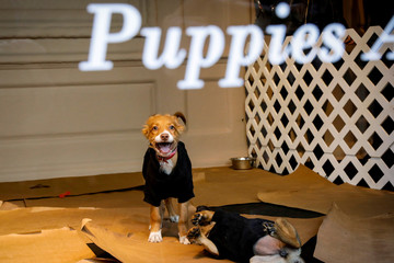 Puppies play in a window display of Saks Fifth Avenue, promoting pet adoption on the occasion of National Puppy Day, in New York