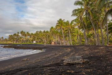 Wall Mural - Hawaiian Green Sea Turtle relaxing on a Black Sand Beach in Hawaii