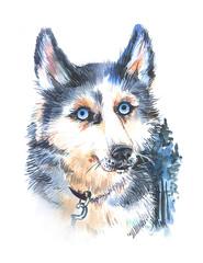 Beautiful hand drawn watercolor illustration husky