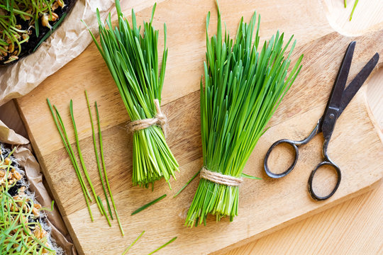 Fresh wheatgrass and scissors on a wooden cutting board