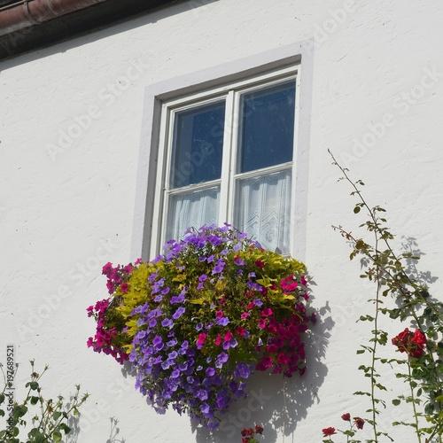 Petunia Petunien Bluhen Bunt Im Blumenkasten Am Fenster An Weisser
