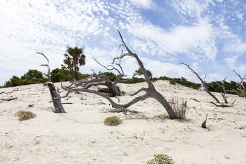 Sand Dune on Beach