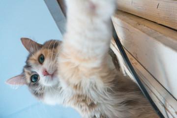 selfie cat at home