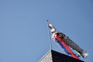 japanese KOINOBORI (carp streamer) / 端午の節句・鯉のぼり