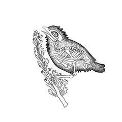 vintage retro vintage style engraving. the skeleton of a test bird. sketch for printing on clothing and fabrics. trend vector