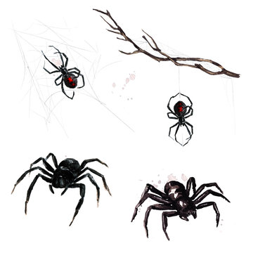 Spiders. Watercolor Illustration.