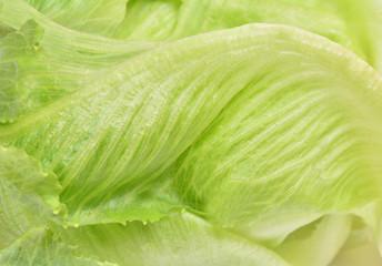 Salad romaine texture