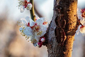 plum blossoms on a tree branch