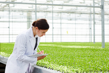 Female agro-engineer making notes in notepad while studying new sorts of lettuce in glasshouse