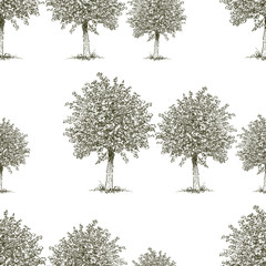 pattern of the deciduous trees