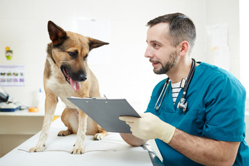 Contemporary veterinarian making notes in medical card of dog and showing it to animal