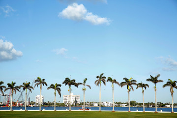Royal palm trees line the water front U.S. President Donald Trump's Mar a Lago estate in  Palm Beach Florida