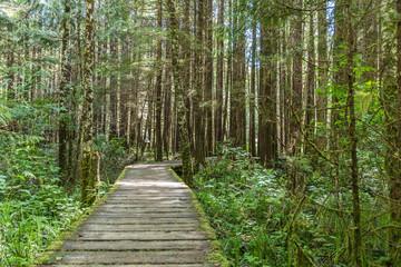 Kanada - Urwald Wanderweg Tofino Picific-Rim-Nationalpark und Rainforrest Trail